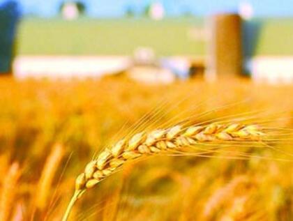 前5月磷复肥行业利润85.5亿同比上升13.3%